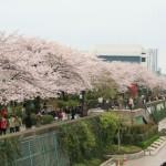 日本賞櫻花,準備入駐淺草 View 酒店