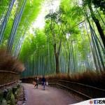 【日本.嵐山】竹林小徑 – 光是拍照就玩一小時