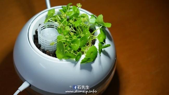 herb-fish-5
