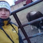 【阿拉斯加】好凍咁睇麝牛,像羊的長毛牛~(影片)